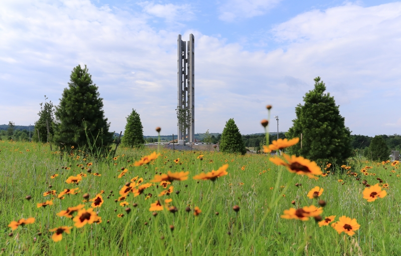 Field of yellow flowers in front of the newly built Tower of Voices at Flight 93 National Memorial