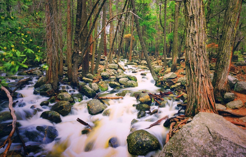 Stream along Bridalveil Fall Trail ay Yosemite National Park