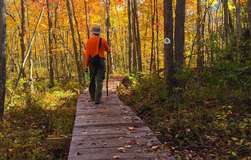 Person in bright orange long-sleeved shirt walking down a wooden boardwalk through the autumn forest on Ice Age National Scenic Trail