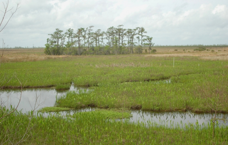 Pantanos en la Reserva Barataria en el Parque Histórico Nacional y Reserva Jean Lafitte