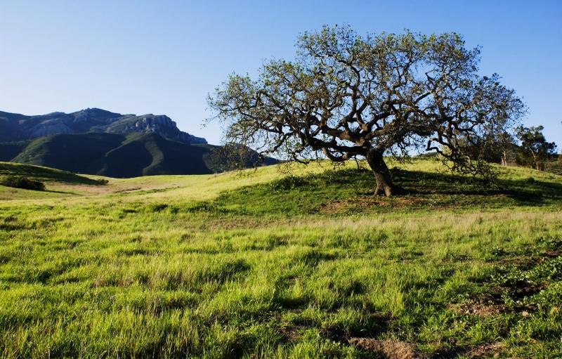 árbol en la colina con grandes colinas en el fondo