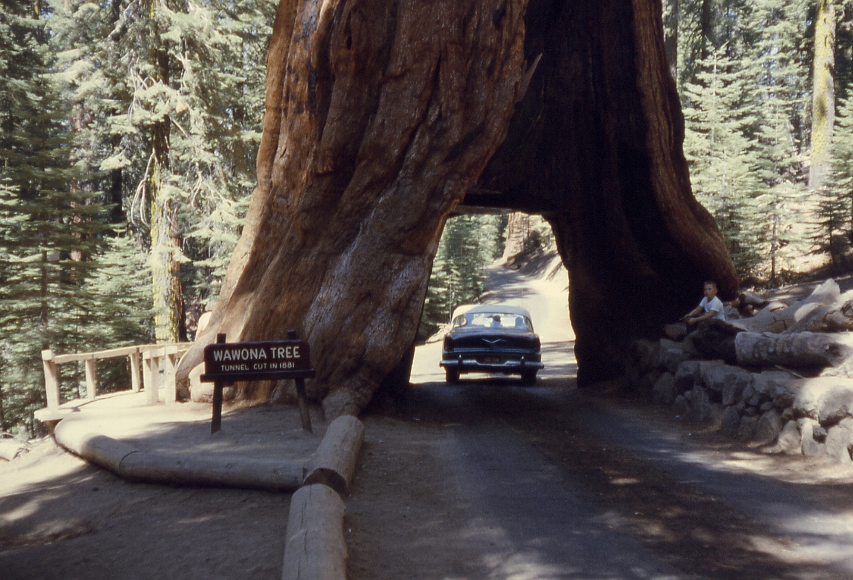 Tunnel tree in Yosemite is an age-old tradition in this national park.