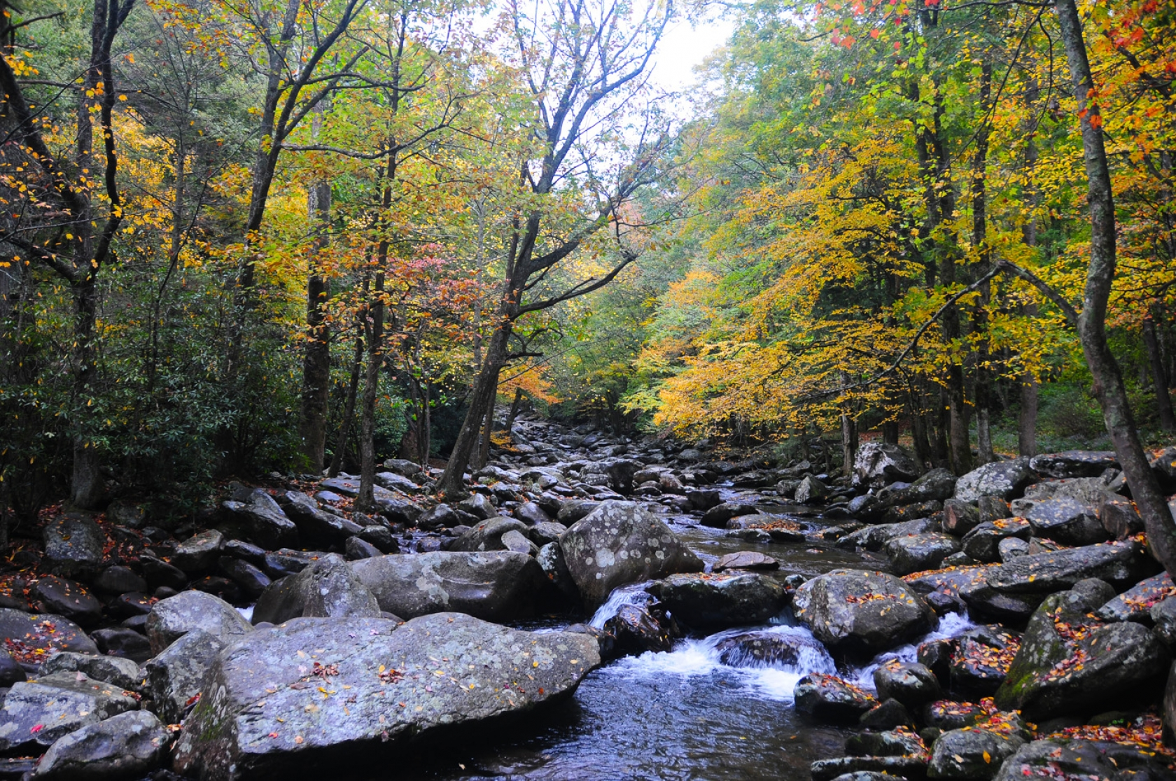 Trees with yellow leaves line a small, boulder-filled river