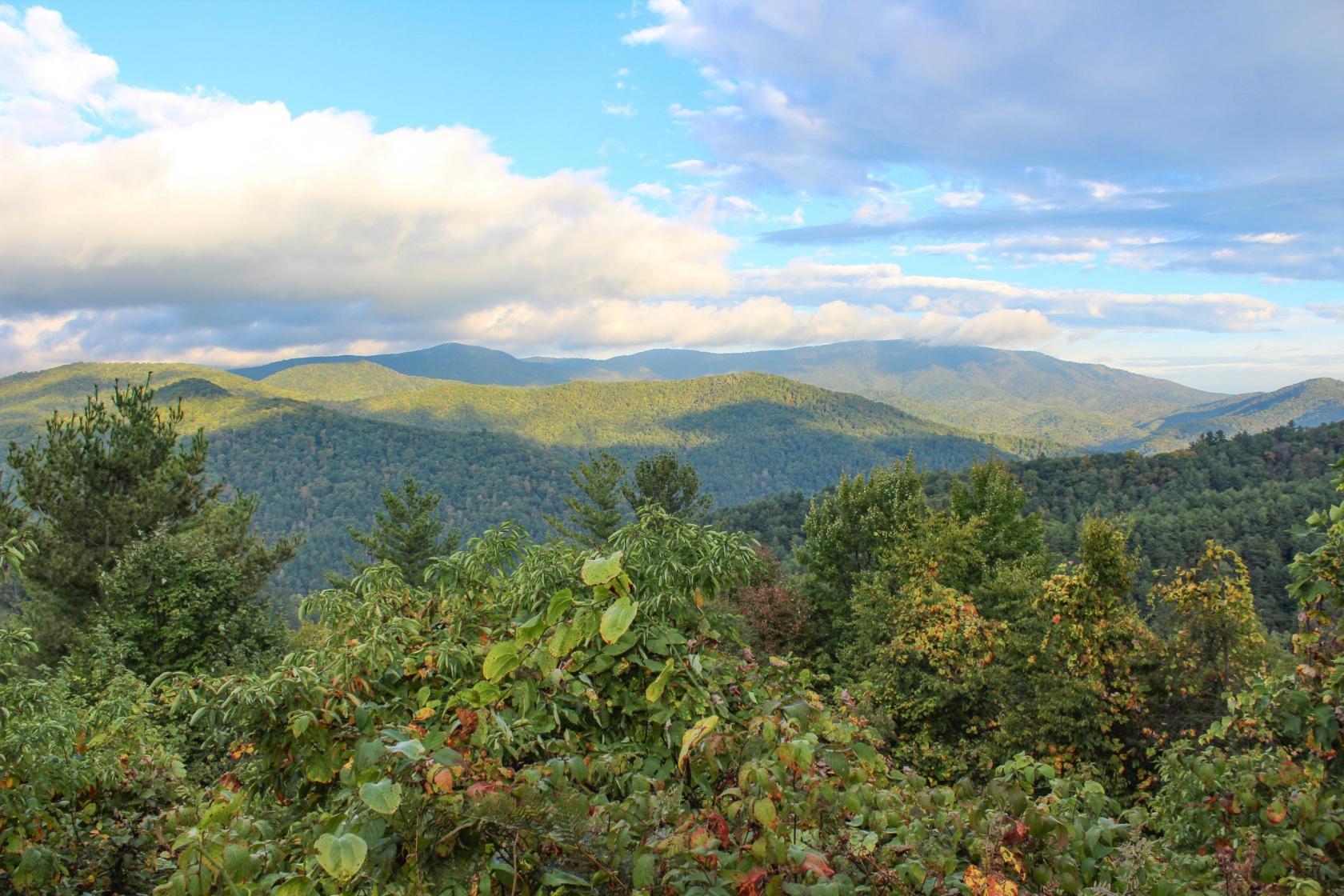 Montañas cubiertas de vegetación