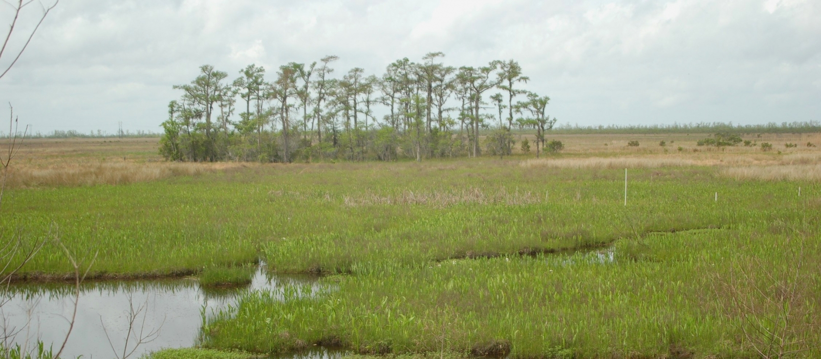 Marshes in the Barataria Preserve at Jean Lafitte National Historical Park and Preserve