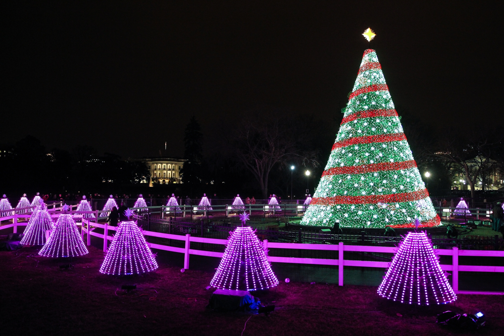 Red and green lit National Christmas Tree surrounded by short purple-lit evergreen trees at President's Park