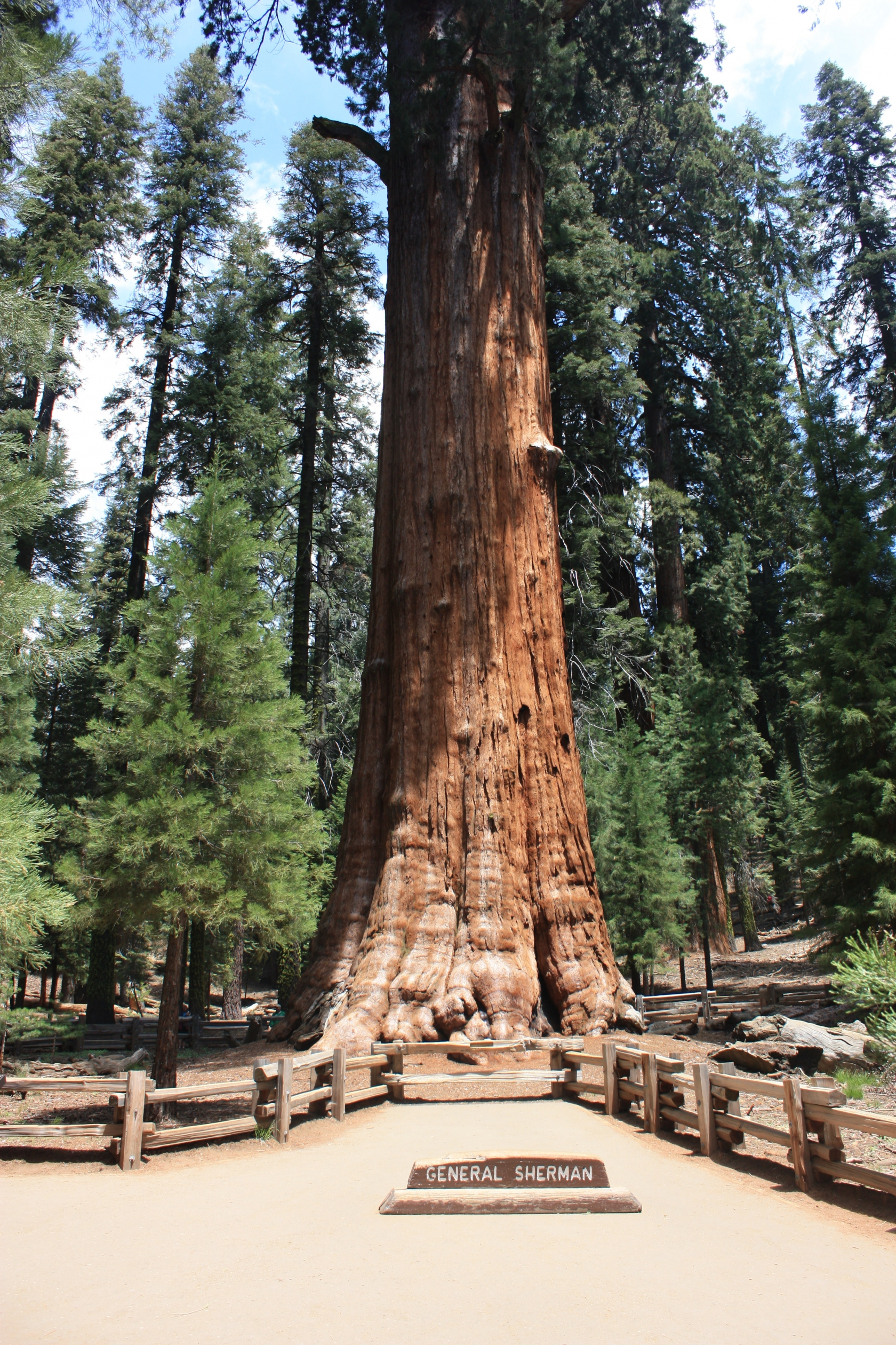 "Giant redwood tree with a plaque saying ""General Sherman"" in front of it at Sequoia National Park"