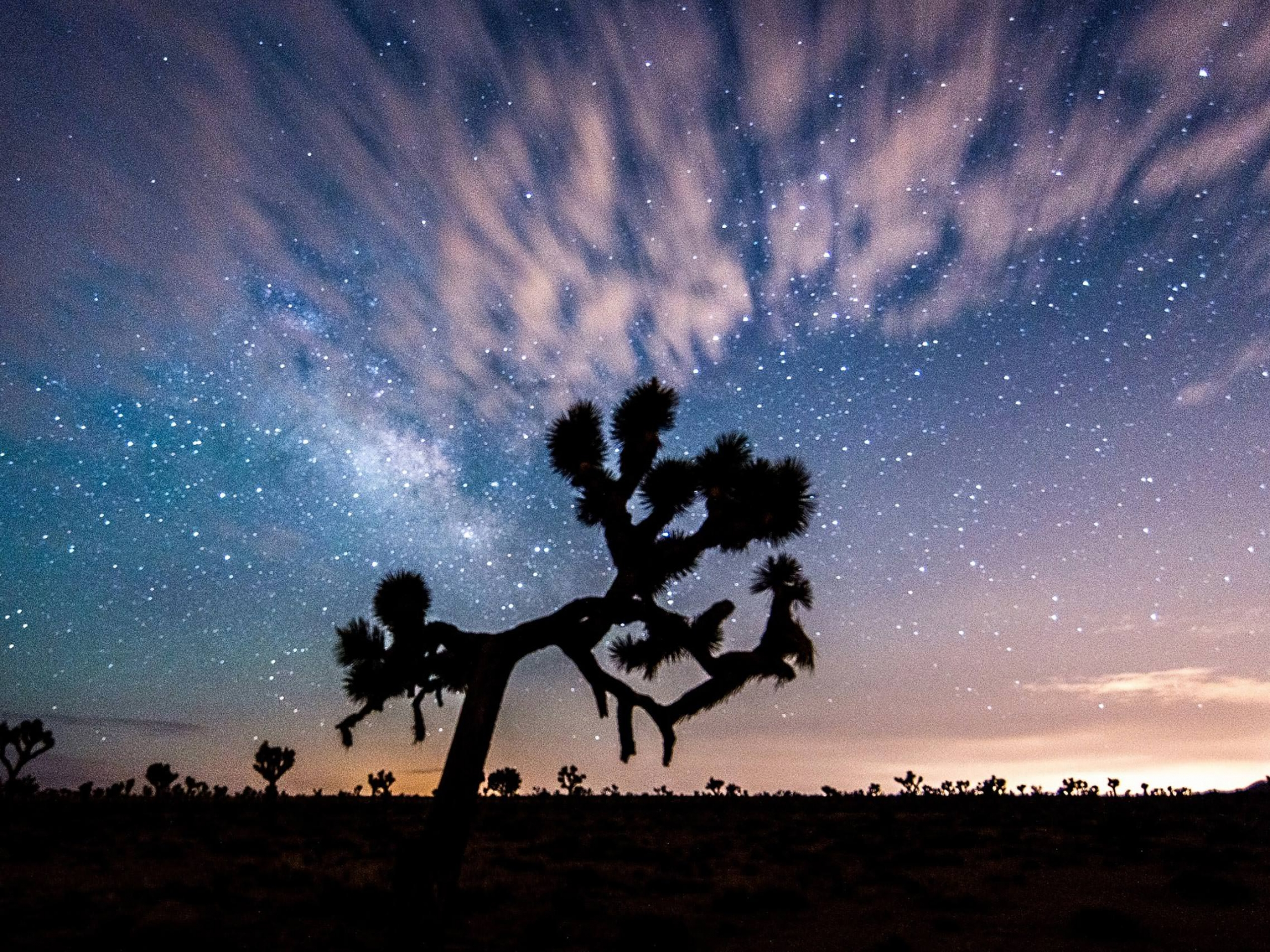 Starry sky in Joshua Tree National Park