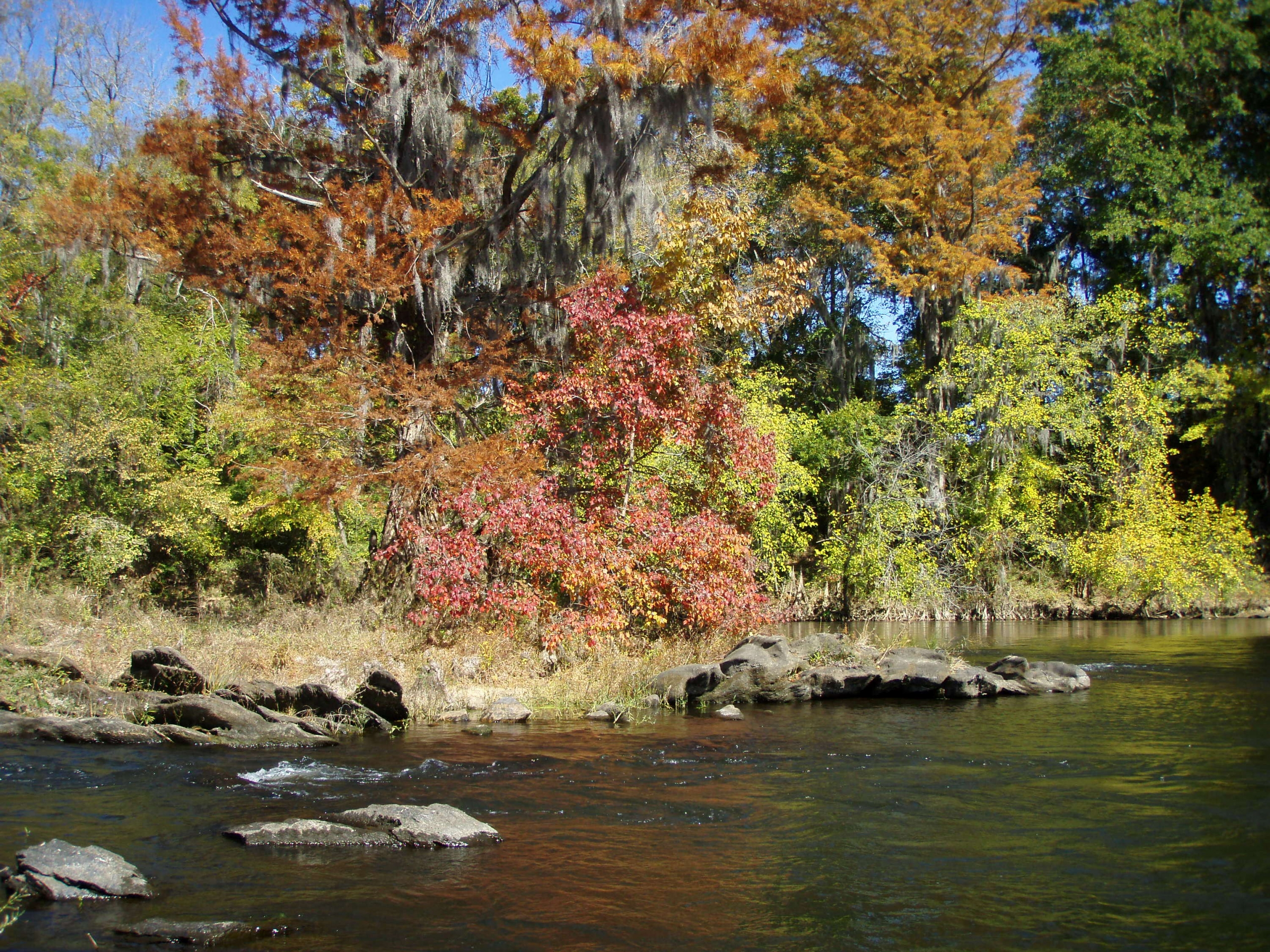 Red, orange, and green leaves on trees lining the banks of the Coosa River along the Alabama Scenic River Trail