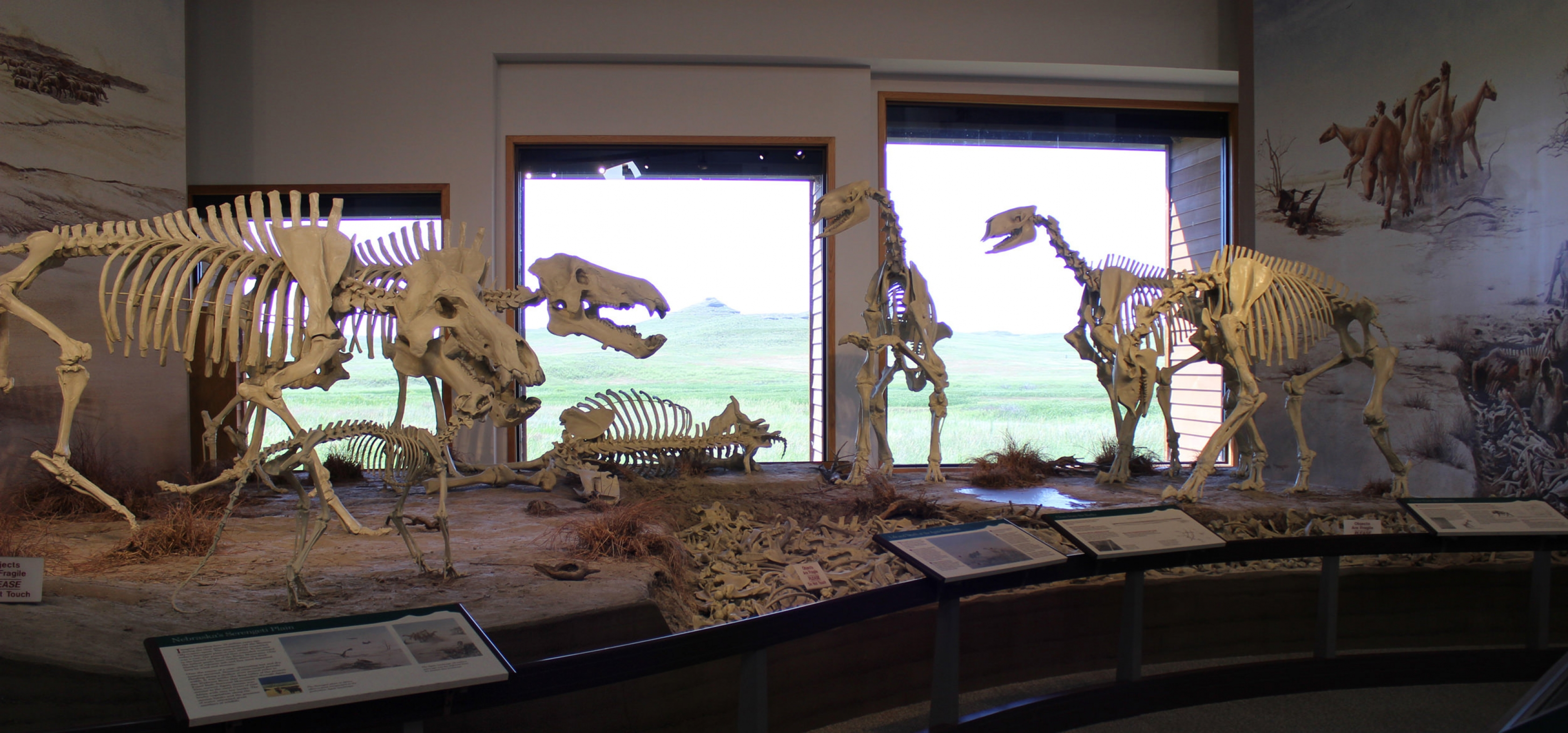 A diorama of fossils at Agate.