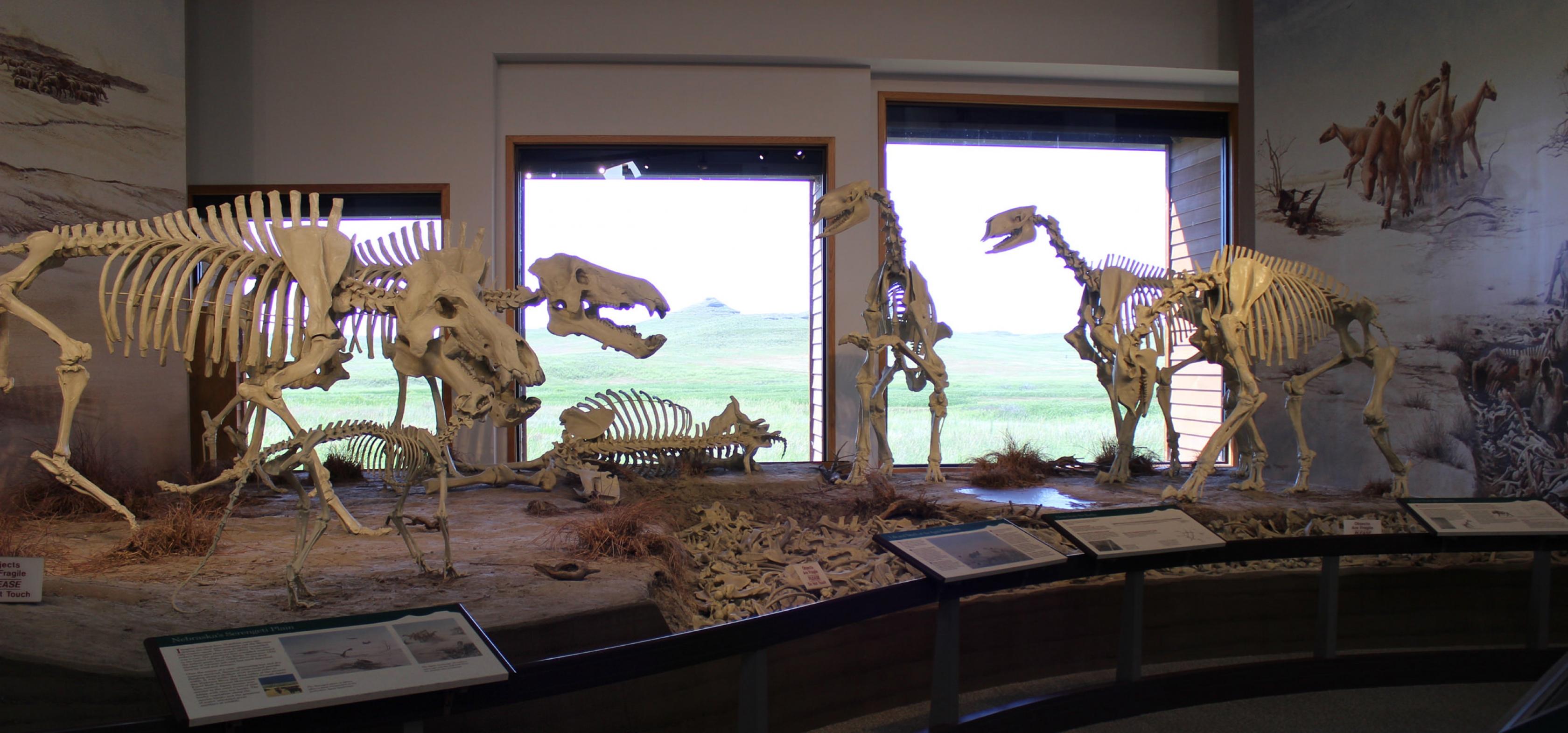Un diorama de fósiles en ágata.