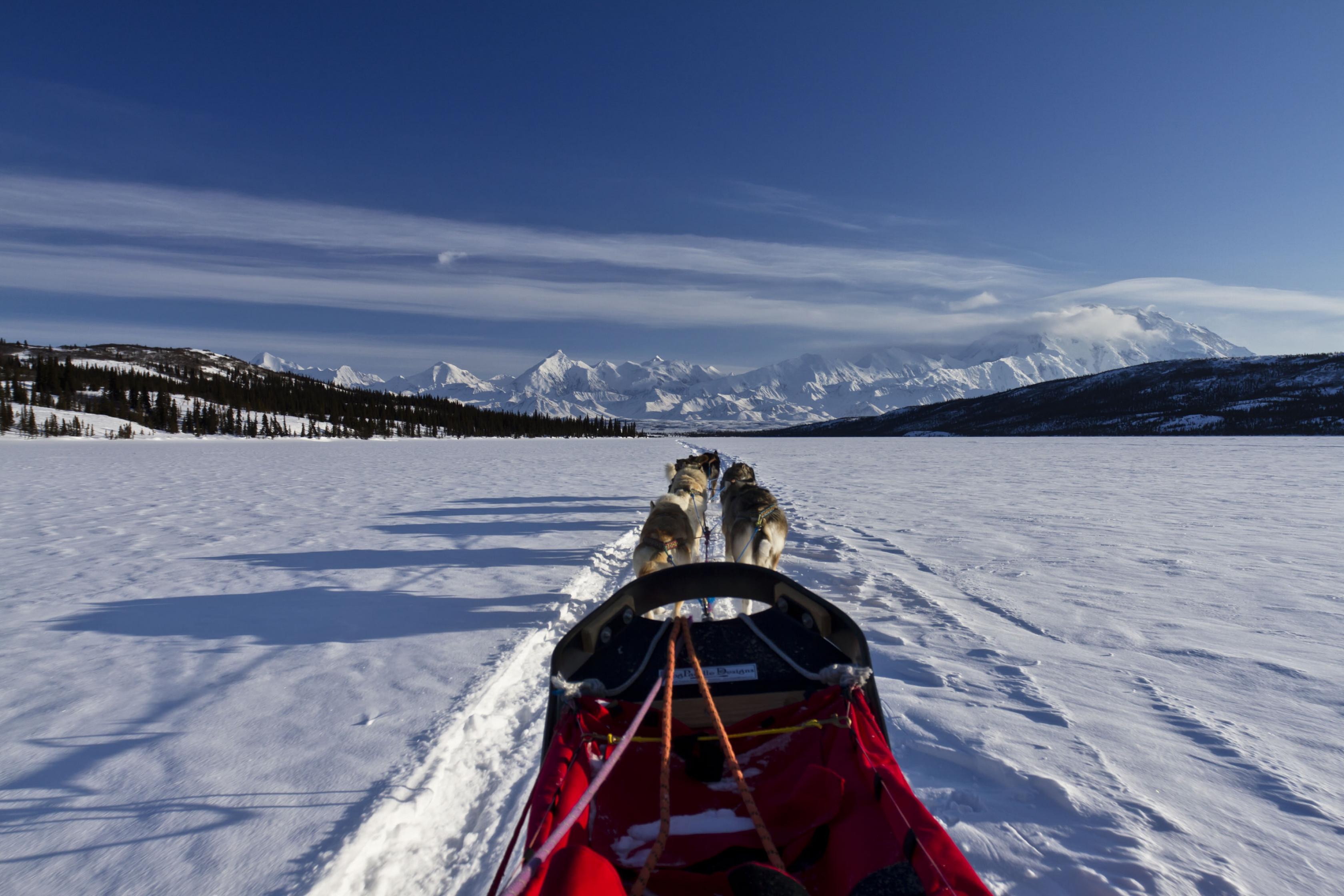La vista es un trineo tirado por un equipo de perros con montañas en el frente rodeado de nieve en el Parque Nacional y Reserva Denali