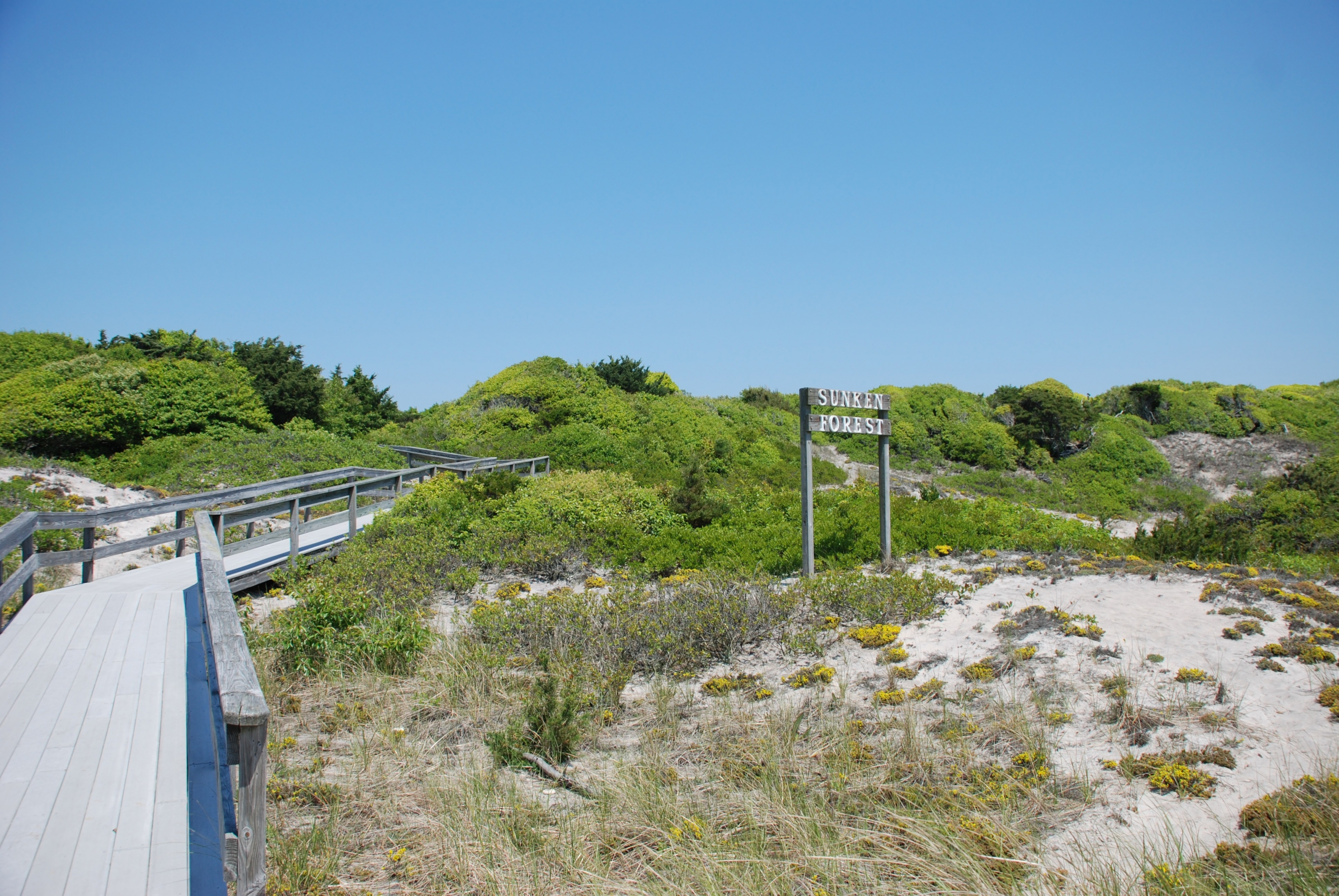 A sign welcomes visitors to the Sunken Forest on the seashore at Fire Island.