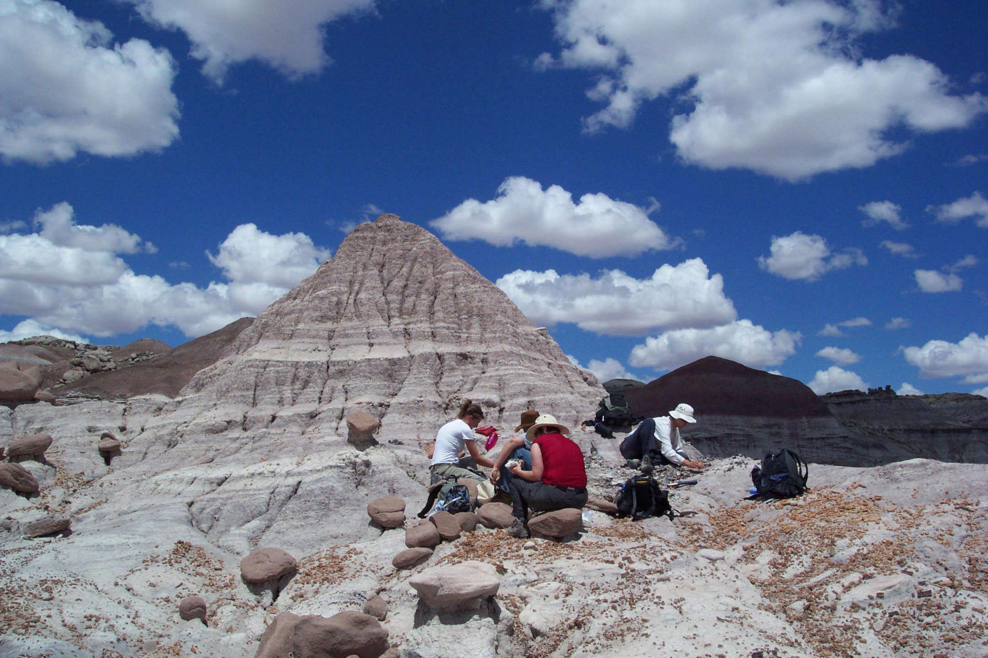 Un grupo de paleontólogos trabaja en bosque petrificado.