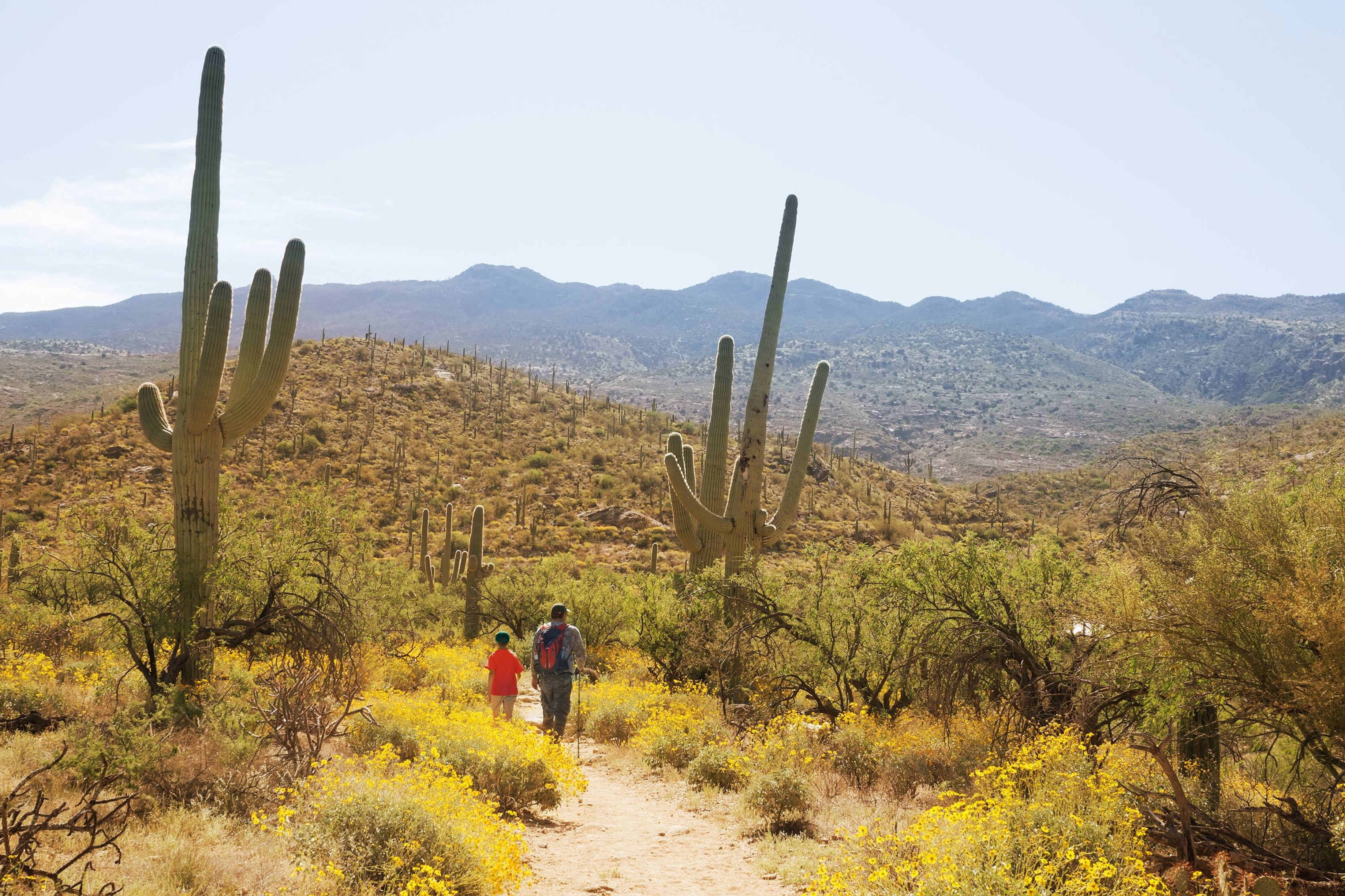 A father and son walk through cacti at Saguaro.