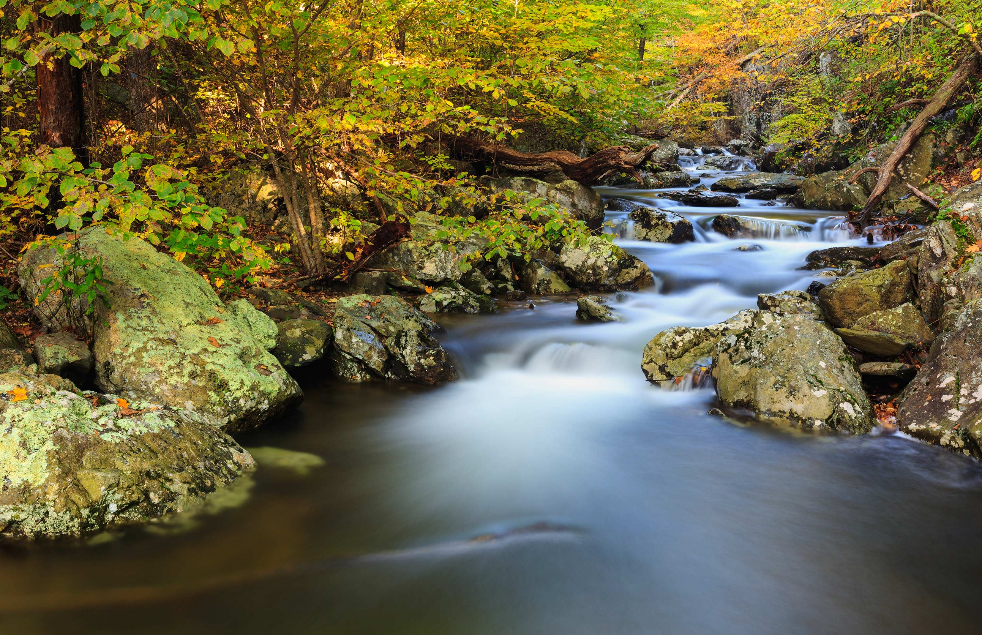 White Oak Canyon offers swimming in Shenandoah National Park.