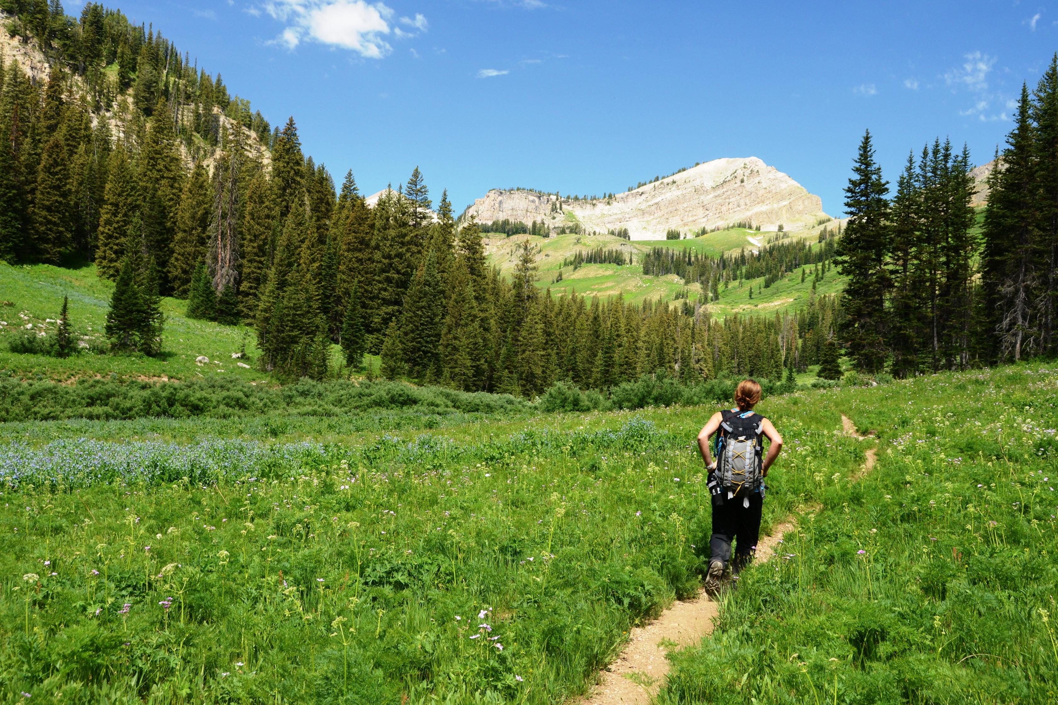 Los excursionistas se abren camino a través de la Gran Tetón.