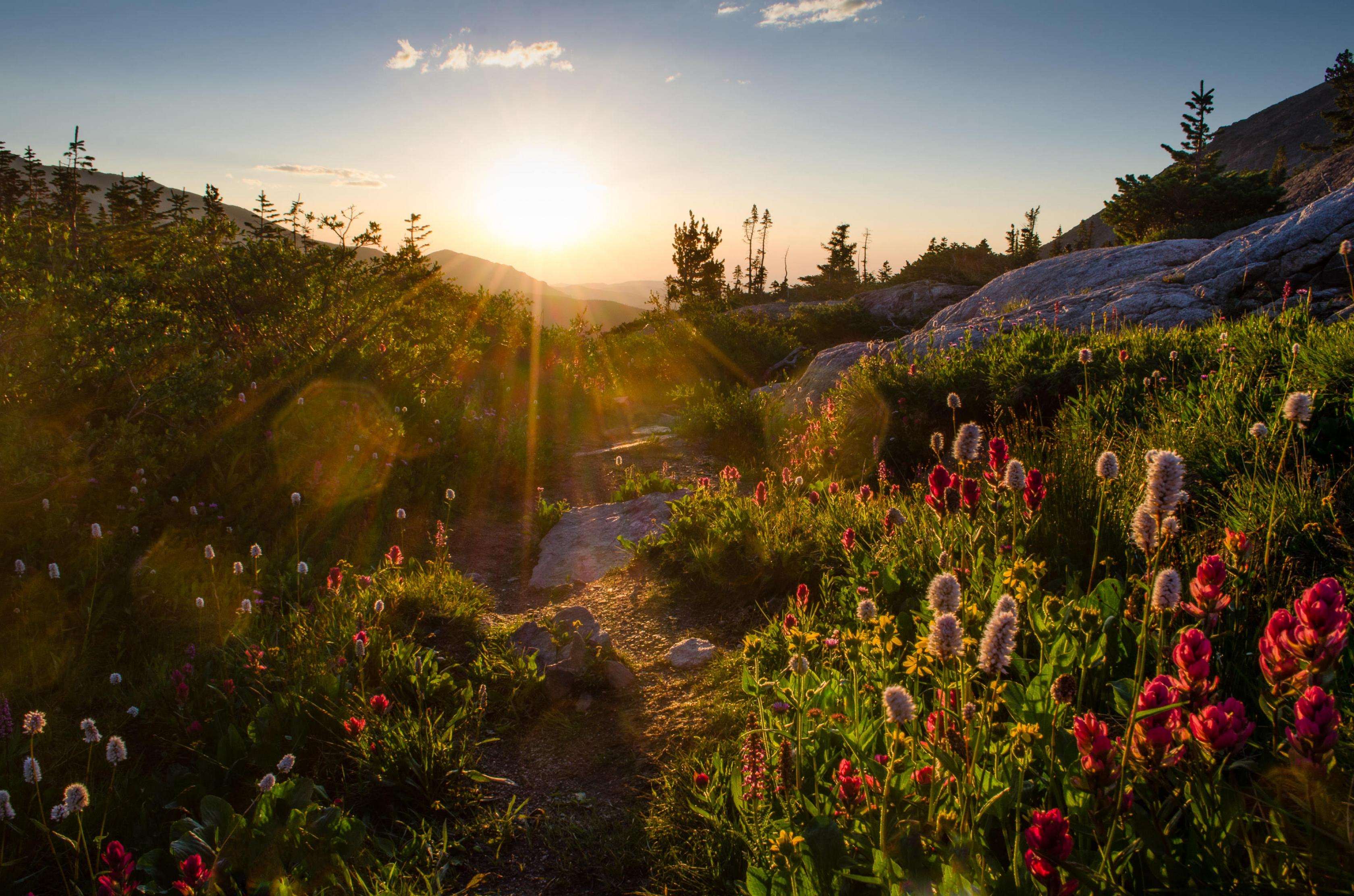 La parte superior cae Ouzel y flores silvestres en el Parque Nacional de las Montañas Rocosas.