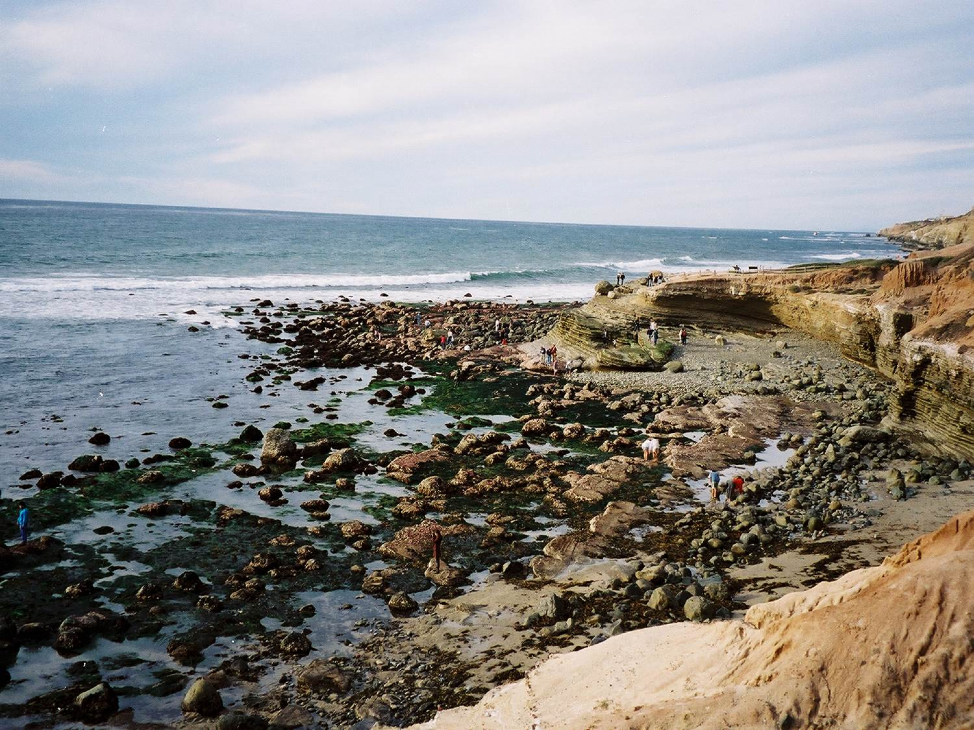 Exploring micro universes find your park tidepooling in cabrillo national monument nvjuhfo Gallery
