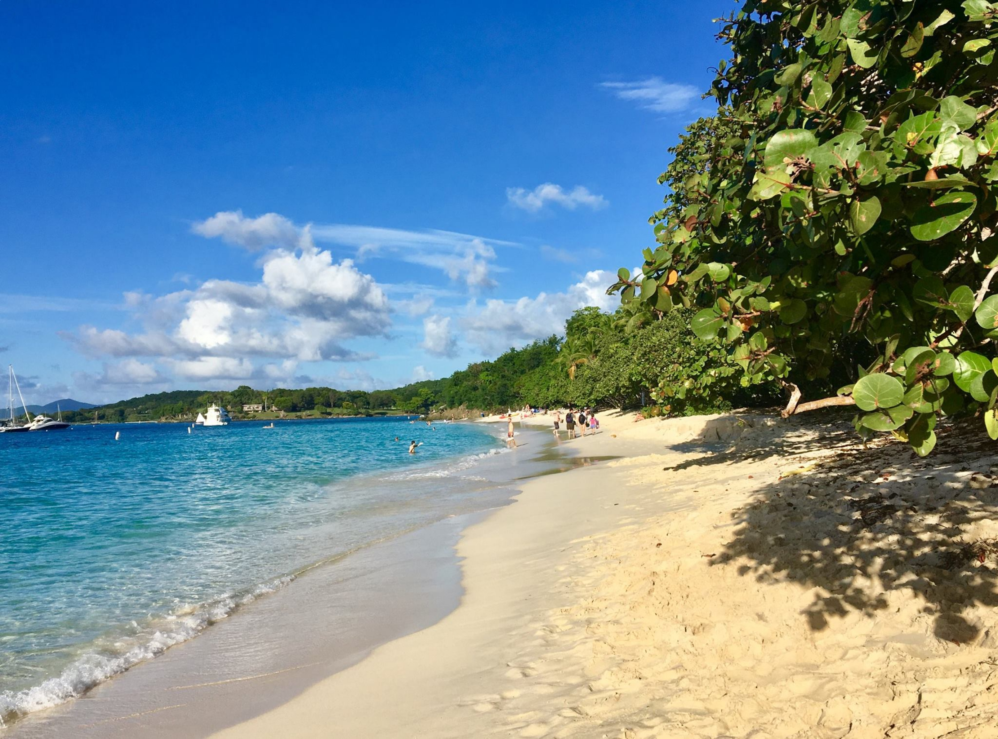 Sunny white sandy beach lined with green trees next to the blue ocean at Virgin Islands National Park