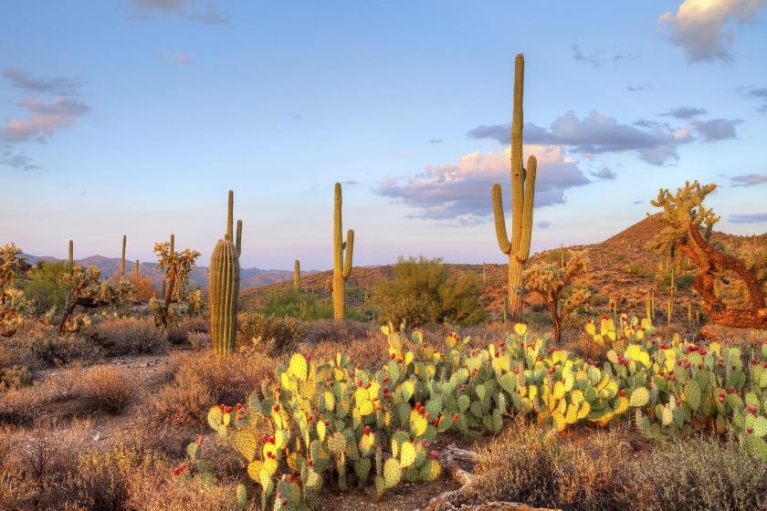 cactus reflejan la puesta del sol
